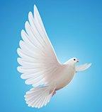 20210318-143159-Obit-Dove.tif.jpg