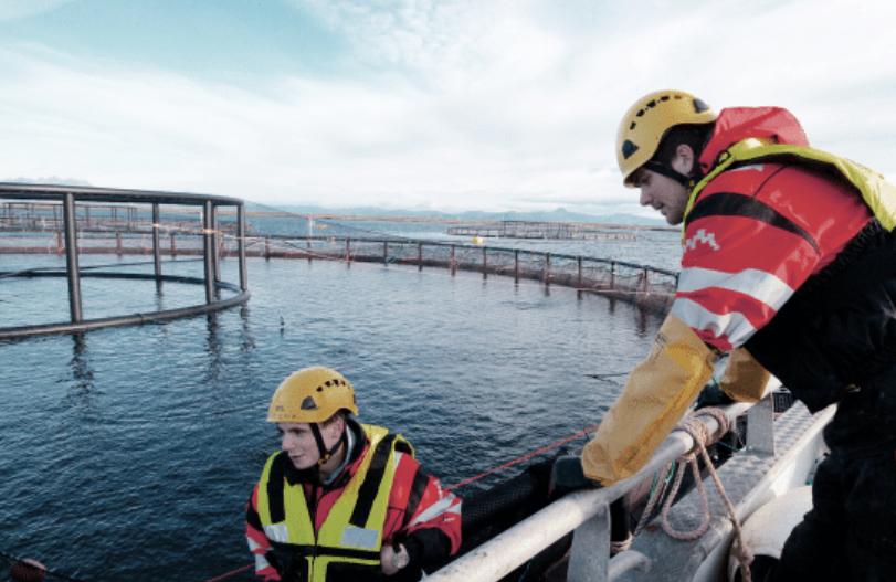 Nova Sea Employees Benefit From Bonus Policy - Fish Farmer Magazine